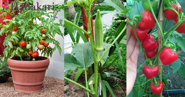 Easy plats to grow in your garden