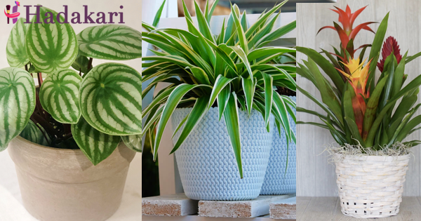 House plants that needs almost no sunlight
